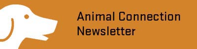 Animal Connection Newsletter
