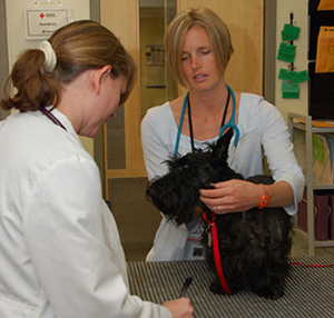 small animal vets