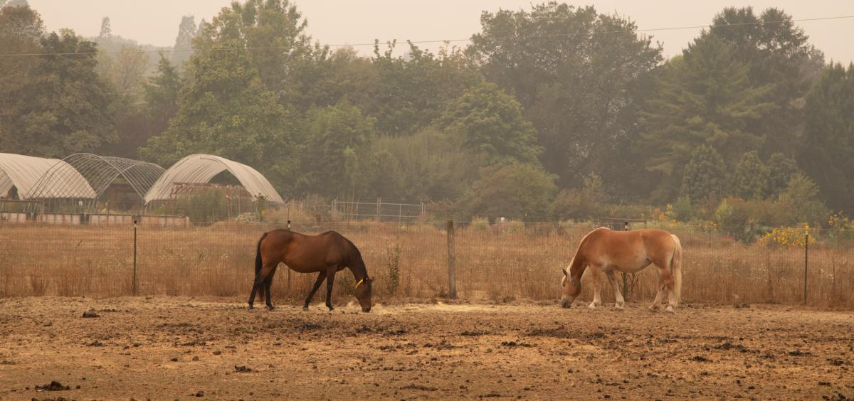 Horses in smoky field
